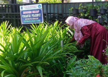 Suharti, S.Pd., kepala SDN Rangkah I Surabaya, bersemangat merawat tanaman Pandan Wangi dan tanaman hias Gingseng Jawa yang tumbuh subur di kebun sekolah.