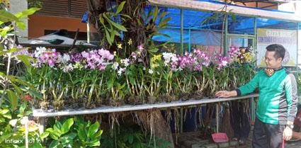 Pembibitan Anggrek dan Tanduk Menjangan serta Green House SDN Tanah Kalikedinding 2 Surabaya